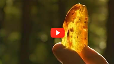 "Start video ""Baltic Amber: The Living Gemstone Part I"""